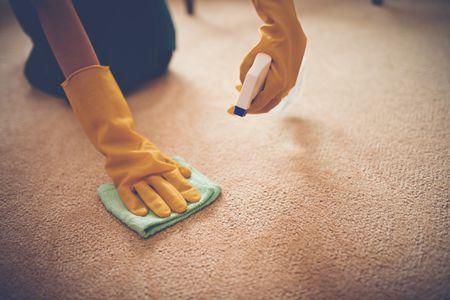 Cara Ampuh Membersihkan Kotoran Hewan Di Karpet